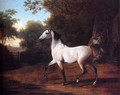 Agasse_Jacques_Laurent_A_Grey_Arab_Stallion_In_A_Wooded_Landscape.jpg